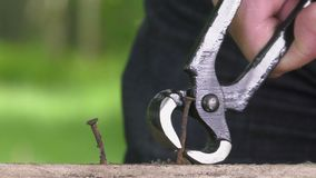 Pulling a carpenter tip with pliers. Joiner clamp pliers close the nail, closeup stock video