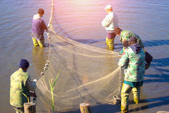 Pulling a Fishing Net Royalty Free Stock Images