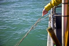 Pulling up a tangle. A Guernsey fisherman who just found a tangle in his line Royalty Free Stock Image