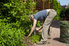Pulling weeds Stock Photos
