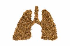 Pulmão humano feito pelo cigarro Fotos de Stock Royalty Free