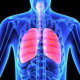 pulmões Fotografia de Stock Royalty Free