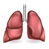 pulmões ilustração stock