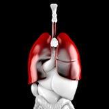 Pulmões humanos Ilustração 3D anatômica Contem o trajeto de grampeamento Fotografia de Stock Royalty Free