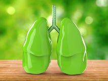 Pulmões verdes Foto de Stock Royalty Free