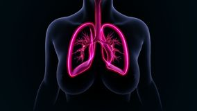 pulmões Foto de Stock Royalty Free