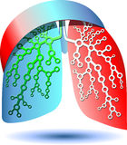 Pulmonary diagnostics Stock Image