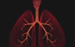 Pulmones Imágenes de archivo libres de regalías