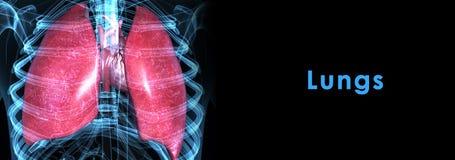 Pulmones con el corazón ilustración del vector