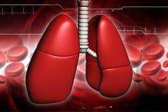 Pulmones humanos Fotos de archivo libres de regalías