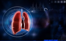 Pulmones humanos Imagen de archivo