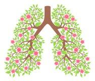 Pulmones sanos Foto de archivo