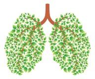 Pulmones sanos stock de ilustración