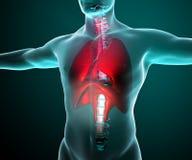 Pulmones vistos en radiografías en un cuerpo stock de ilustración