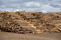 Pulp and Paper Wood. Piles of spruce logs waiting to be processed at a pulp and paper mill Stock Photography