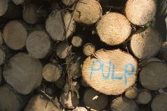 Pulp Wood Logs Royalty Free Stock Images