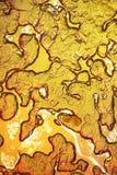 Pulpe de fruit sous le microscope Photo stock