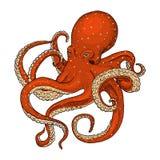 Pulpo de la criatura del mar mano grabada dibujada en el viejo bosquejo, estilo del vintage náutico o marino, monstruo o comida a stock de ilustración