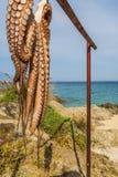 Pulpo de sequía en el mar en Chaldikidi Fotografía de archivo