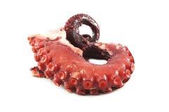 Pulpo del tentáculo Fotografía de archivo libre de regalías