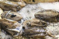 Pulpo fresco en el mercado de pescados fotografía de archivo libre de regalías
