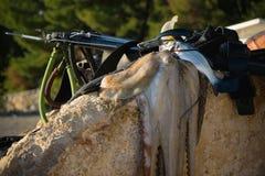 Pulpo fresco y artes de pesca subacuáticas en la roca fotografía de archivo