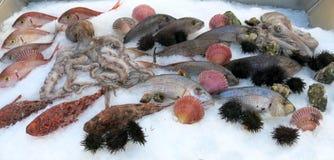 Pulpo y otros muchos pescados frescos en el refrigerador Foto de archivo libre de regalías
