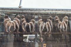Pulpos grandes, recién pescados, suspendidos en el escaparate en el lado soleado de la taberna fotos de archivo libres de regalías