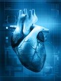 Pulsação do coração Foto de Stock
