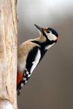 Pulsación de corriente del pájaro Imagenes de archivo