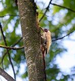 Pulsación de corriente en un árbol Foto de archivo