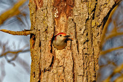 Pulsación de corriente Rojo-hinchada en un agujero Foto de archivo libre de regalías