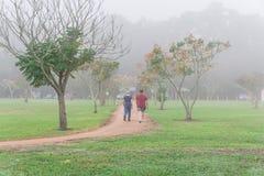 Pulser de personnes, s'exerçant au parc urbain dans le matin brumeux de chute Photographie stock libre de droits