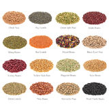 Pulses Collection with Titles royalty free stock photography