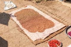 Pulses drying in the sun Royalty Free Stock Images