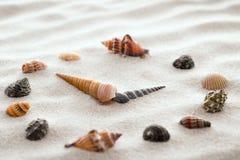 Pulso de disparo estilizado do seletor para shell na areia para a concentração e o abrandamento para a harmonia e no equilíbrio n Fotos de Stock