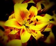 Pulso de disparo solar velho no jardim Foto de Stock Royalty Free