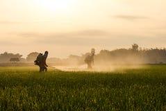 Pulvérisation d'agriculteurs de riz photo stock