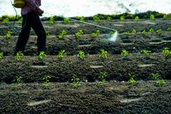 Pulvérisation d'insecticides Photographie stock libre de droits