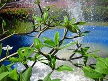 Pulvérisez l'eau sur les feuilles de l'usine Image stock