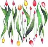Pulvérulent jaune pourpre rose rouge de belles tulipes de ressort disposé Image stock