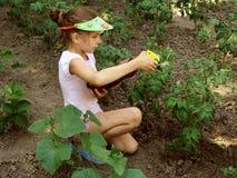 Pulverização da colheita Fotos de Stock Royalty Free