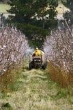 Pulverização da colheita Imagem de Stock