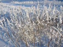 Pulverizado con las flores y la hierba de la nieve Fotografía de archivo