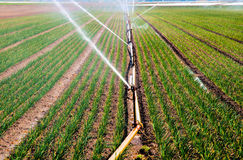 Pulverizador de água na agricultura Fotografia de Stock