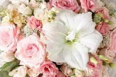 Pulvrige rosa Farbe Blumenniederlassung stieg, Knospen, Nahaufnahme Lizenzfreie Stockfotos