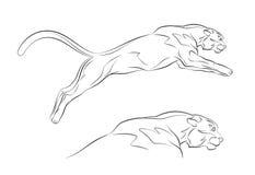 Puma Imagen de archivo
