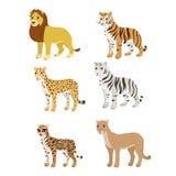 Κινούμενων σχεδίων καθορισμένο λιονταριών τιγρών puma τιγρών λεοπαρδάλεων άσπρο ocelot Στοκ Εικόνα