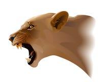 puma vector illustratie