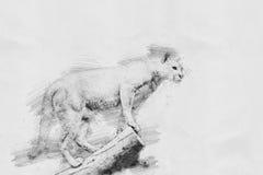 puma Croquis avec le crayon Photos stock